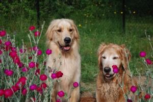 K9 Magnum with his older sister Sierra.